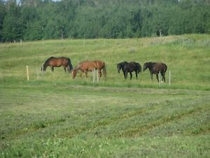 Affordable Horse Boarding Strathcona County Edmonton Area image 6