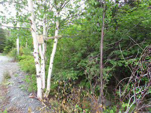 26-28 CROSS MEADOW, I ACRE BOREAL FOREST...CBS. St. John's Newfoundland image 16