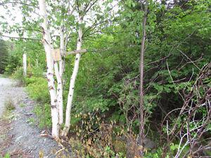 26-28 CROSS MEADOW, I ACRE BOREAL FOREST...CBS. St. John's Newfoundland image 16
