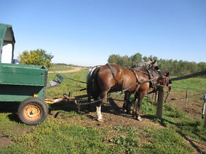 Trail rides, wagon rides, birthday parties, and much much more Moose Jaw Regina Area image 2