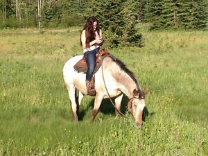 Appaloosa Gelding for sale Prince George British Columbia image 4