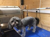 Space to rent for a dog groomer.
