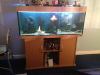 Juwel 4ft fish tank with cabinet and fish!