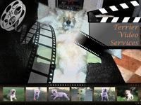 Video Editing Service...