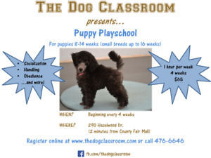 PUPPY PLAYSCHOOL at The Dog Classroom