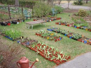 Vente de vivace  /  Perennial Plant Sale