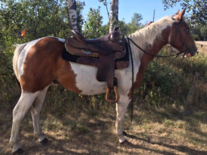Well started 2 yr old APHA Gelding