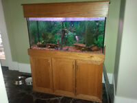 90 Gal Fish Tank with cabinet