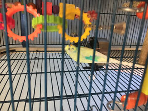 4 Budgies and large Cage on Castors