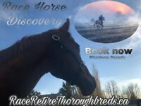 Discover the Race Horses up close recently retired off Track