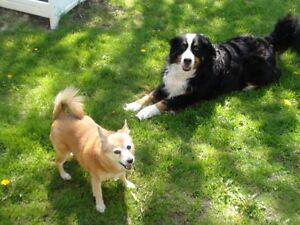PAWS 4 CUDDLES - Dog Walking & Pet Sitting - Beaverton & area Kawartha Lakes Peterborough Area image 10