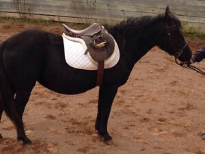 Pony for Lease/Sale