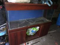 Large fish tank for sale with stand