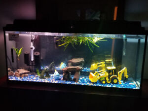 55 gallon fish tank w/everything $400 obo