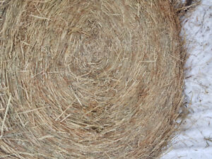 Green Feed / Silage Bales