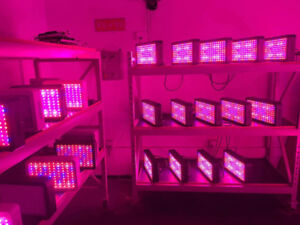 Best cost-effective LED cannabis grow lights 2400,4800W and so o