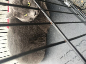 FREE 2 Male (5 years old) cats