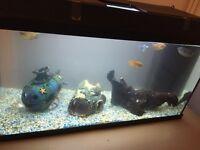Fish tank - 2 Terrapins & 5 fish