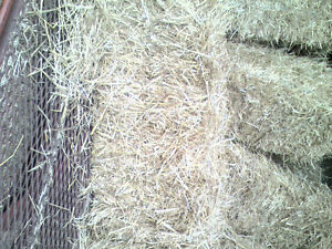Small Square Bales of Straw for Sale