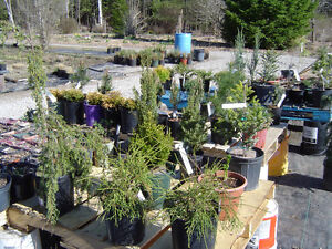 PERENNIALS-buy from a local grower-ALWAYS SAVE THE TAX Kawartha Lakes Peterborough Area image 7