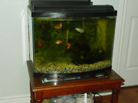 Fish tank for sale  Comes with a digital thermometer, a lid, etc