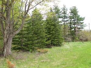 Country Building Lot - Hwy 35, Coboconk. $54,900