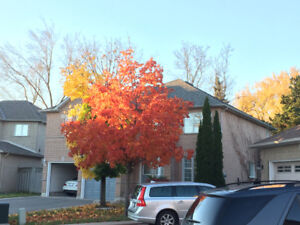 Closed to UTM and Sheridan Centre 2900 sqft House