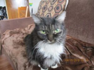 FREE ADORABLE ORPHANED CAT. 5 YRS OLD,