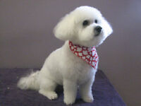 The Bow Wow Grooming Boutique with over 26 years experience