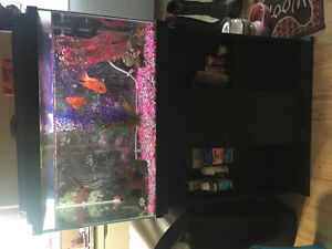 30 gallon tank, stand, fish and accessories