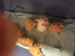 Kittens for sale , rehome June 29, 2018,