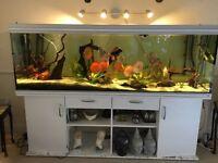 Rena Aquarium 8ft long (850L)