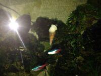 Tropical fishtank snails FREE