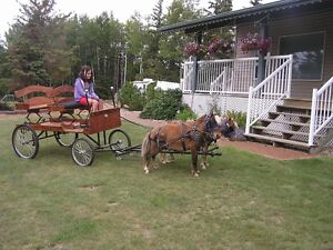 mini horse and cart and harness