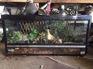 Aquarium reptiles