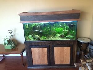 75 gallon with stand/cover, fish, live plants