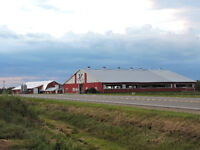 GOING CONCERN DAIRY FARM FOR SALE