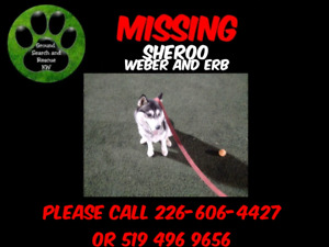 Sheroo is missing