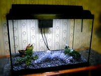 Fish Tank Aquarium Like New