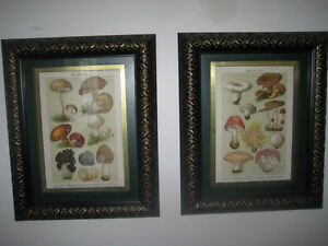 Antique 100+ year old German art lithograph of MUSHROOMS