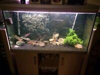 400ltr rena fish