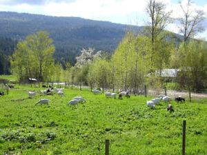 Farm Labour