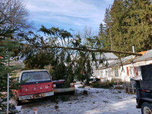 Storm damage tree service
