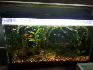 30G fish tank