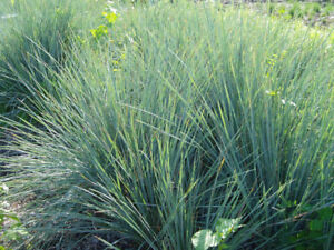 Ornamental Grasses For Your Gardens