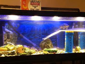 Tortue plus aquarium plus 2 filtreurs