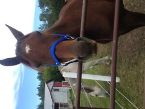 Looking for Horse Boarding Near Gibbons Area
