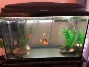 goldfish free to good home