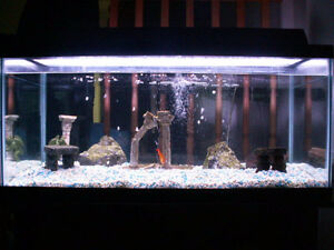 10, 20, 30, 40 Gallon Fish Tanks w/ Accessories and Decorations