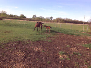 land for rent for horses...35 acres ...water..easy acces